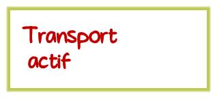 transportact